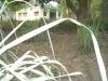 agro-foresty-maintained-by-eco-club-jagdamba-hs-school-bardiya