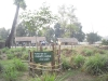 plant-planted-by-leonardo-d-caprio-in-jagdamba-hs-school-bardiya